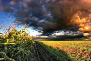 clouds field sky landscape