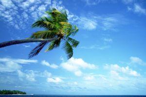 clouds nature sea sky palm trees