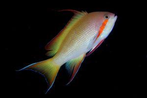 colorful animals fish underwater