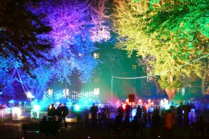 colorful lights trees