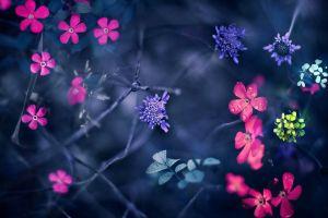 colorful plants macro flowers