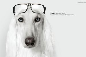 commercial dog artwork glasses