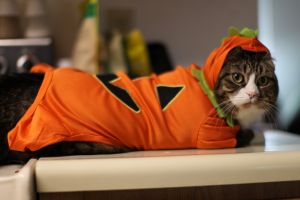 costumes cats animals