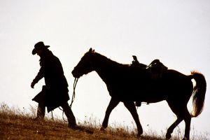 cowboys animals horse