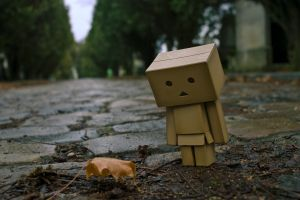 danbo cobblestone leaves