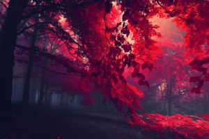 dark plants mist nature landscape trees red leaves forest red fallen leaves leaves fall
