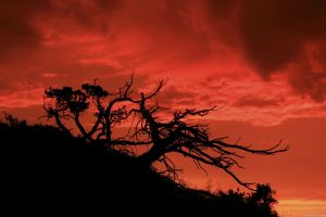 dead trees nature silhouette red sunlight clouds trees sunset landscape