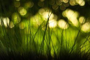 depth of field bokeh green macro grass