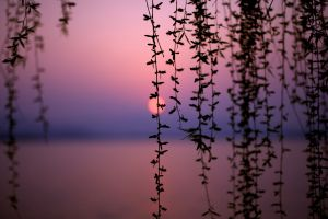 depth of field dusk sunset vines landscape bokeh silhouette