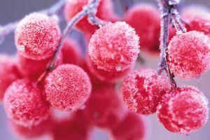 depth of field food pink fruit macro red frost