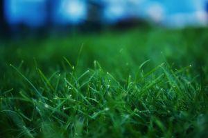 depth of field grass plants