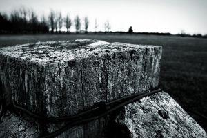 depth of field monochrome wood field