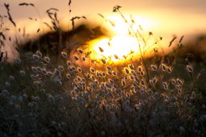 depth of field nature plants grass flowers sunlight