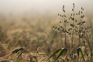 depth of field nature plants