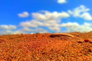depth of field sand red