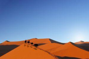 desert camels sky landscape sand