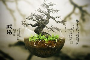 digital art plants bonsai trees typography japan