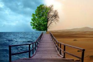 digital art splitting trees sea desert pier nature