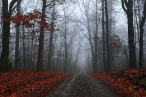 dirt road fall mist forest landscape selective coloring