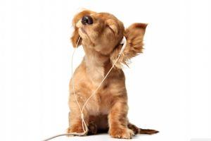 dog animals white background baby animals earphones