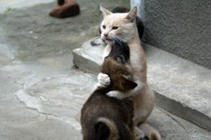 dog hugging cats puppies animals