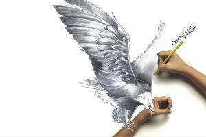 drawing eagle artwork