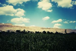 egypt sky outdoors plants