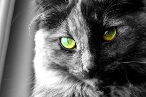 eyes selective coloring animals cats
