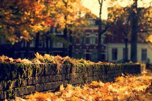 fall bricks leaves fallen leaves city