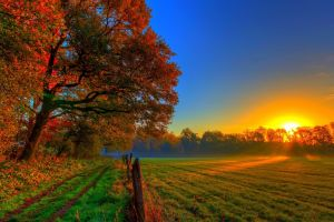 fall landscape field trees sunlight sunset nature