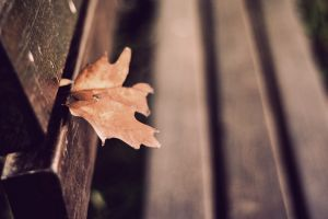 fall leaves depth of field bench