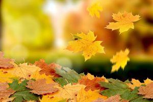 fall macro nature leaves