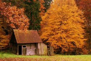 fall nature house leaves