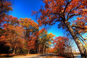 fall road trees