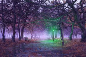fall street light trees leaves cobblestone bench soft shading