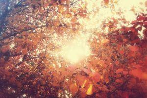 fall trees leaves nature sunlight