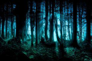 fantasy art night forest digital art