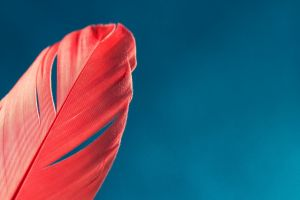 feathers simple background red blue background sky