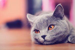 feline animals cats depth of field