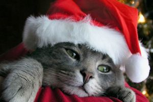 feline animals christmas cats