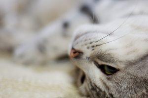 feline animals depth of field cats