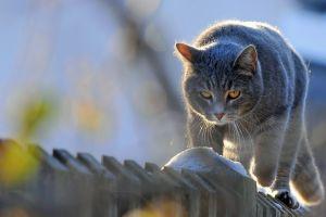 fence feline animals cats