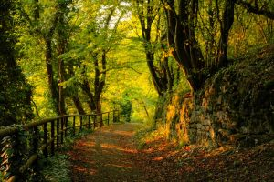 fence path forest trees nature green landscape