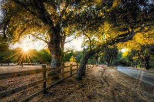 fence trees hdr sunset nature road