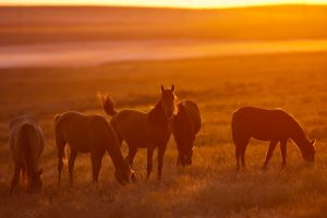 field animals sunlight horse