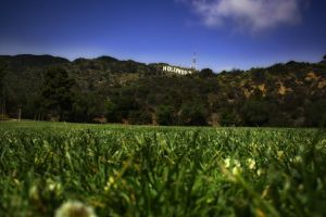 field hollywood landscape grass signs hills worm's eye view california