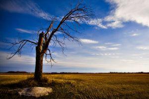 field landscape trees sky