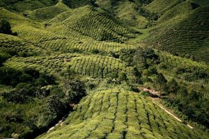 field malaysia national geographic landscape