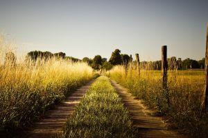 field pathway plants landscape dirt road grass