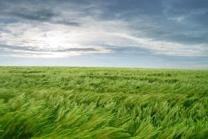 field sky landscape